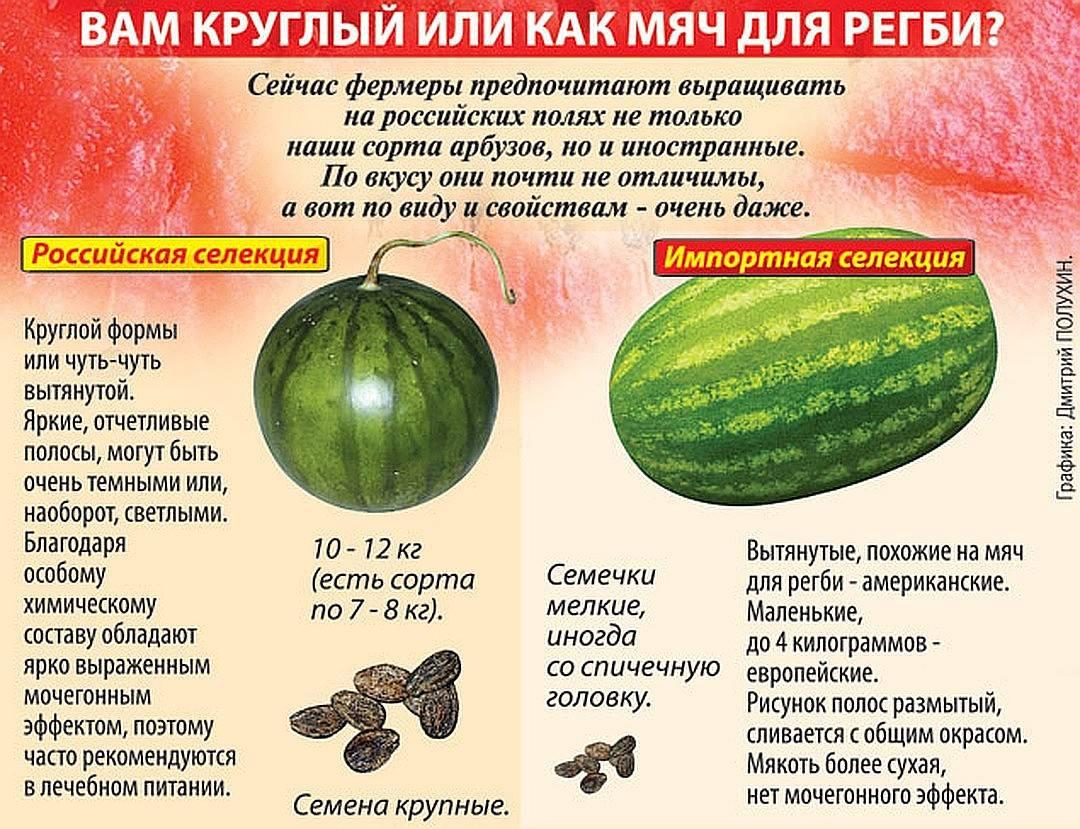 Как выбрать спелый арбуз? как выбрать спелый и сладкий арбуз: советы покупателю