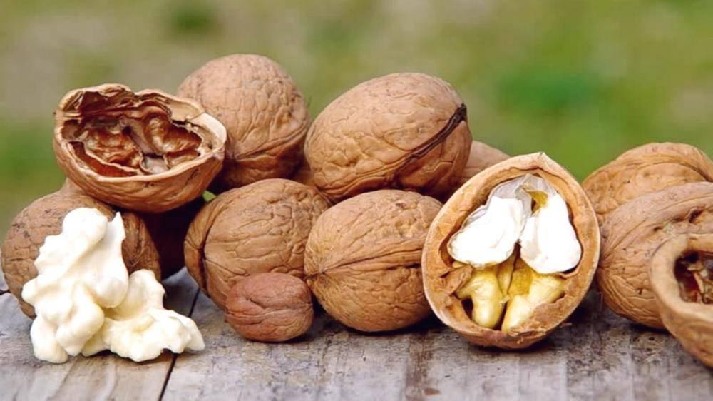 Польза и вред орехов при грудном вскармливании