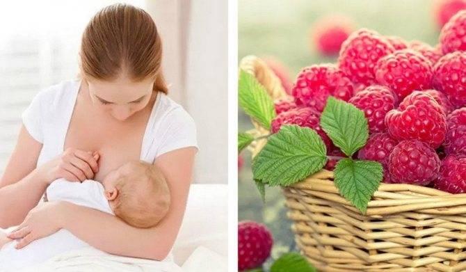 Можно ли малину кормящей маме