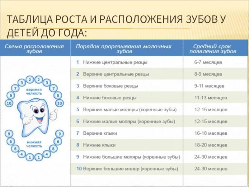 Во сколько лет молочные зубы меняются на коренные?