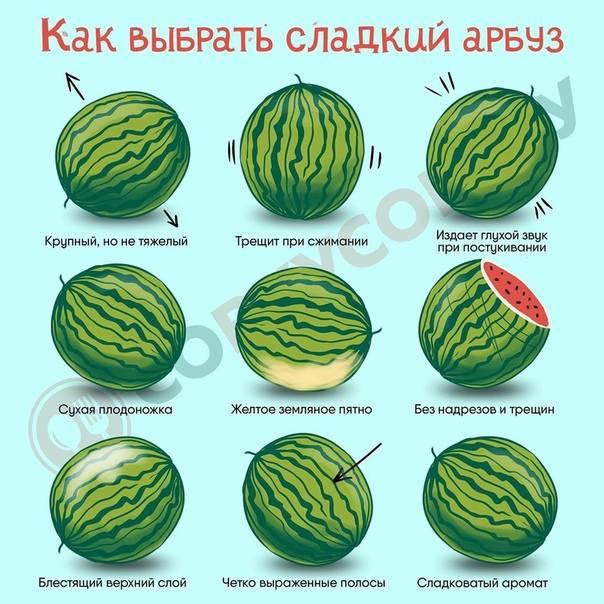 Как выбрать спелый и сладкий арбуз: рекомендации по правильному выбору девочки, мальчика, по стуку / mama66.ru