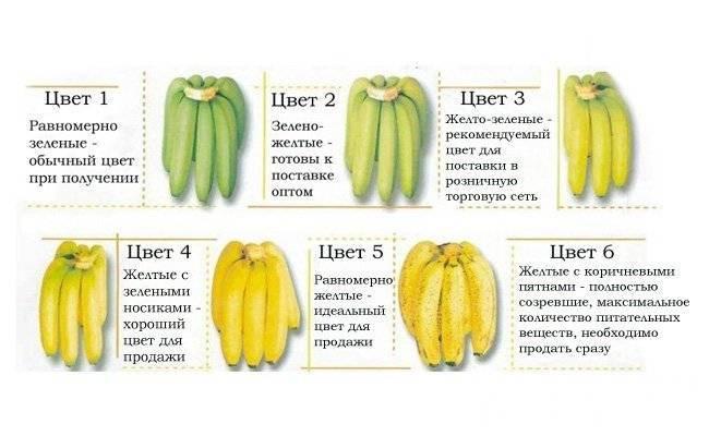 Со скольких месяцев и как давать детям бананы?