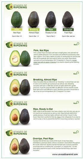 Авокадо: уникальные полезные свойства и когда его можно предлагать детям в качестве прикорма