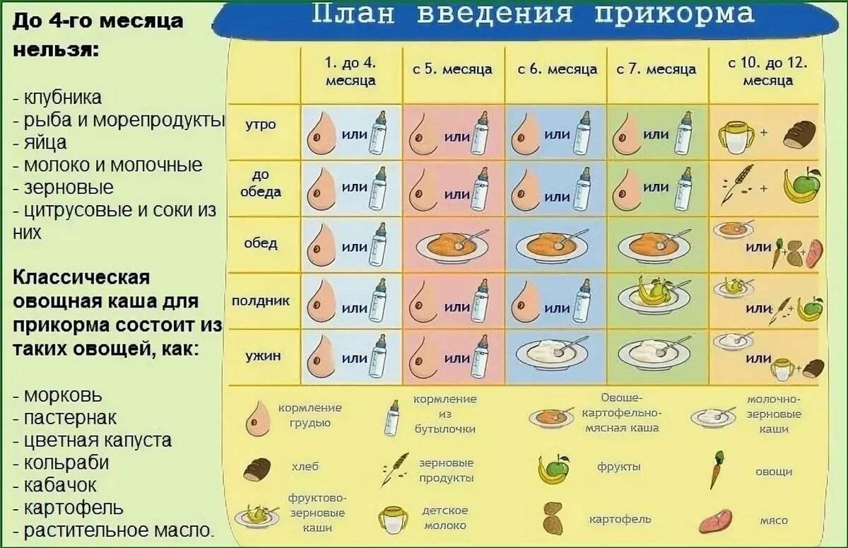 Цукини – что это и состав, калорийность, пошаговые рецепты приготовления жареных, запеченных и тушеных