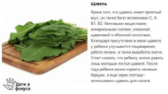 Щавель: лечебные свойства и противопоказания   food and health