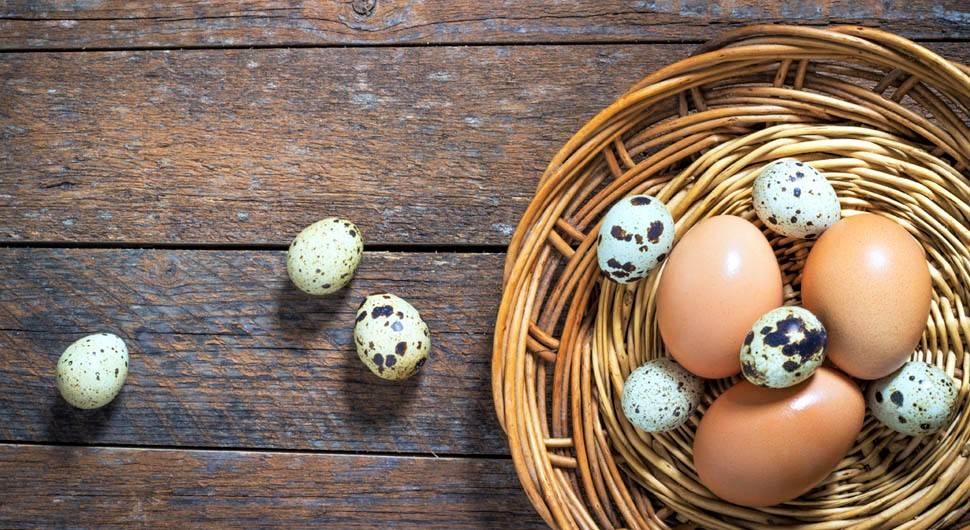 Сырые, вареные и перепелиные яйца при гастрите