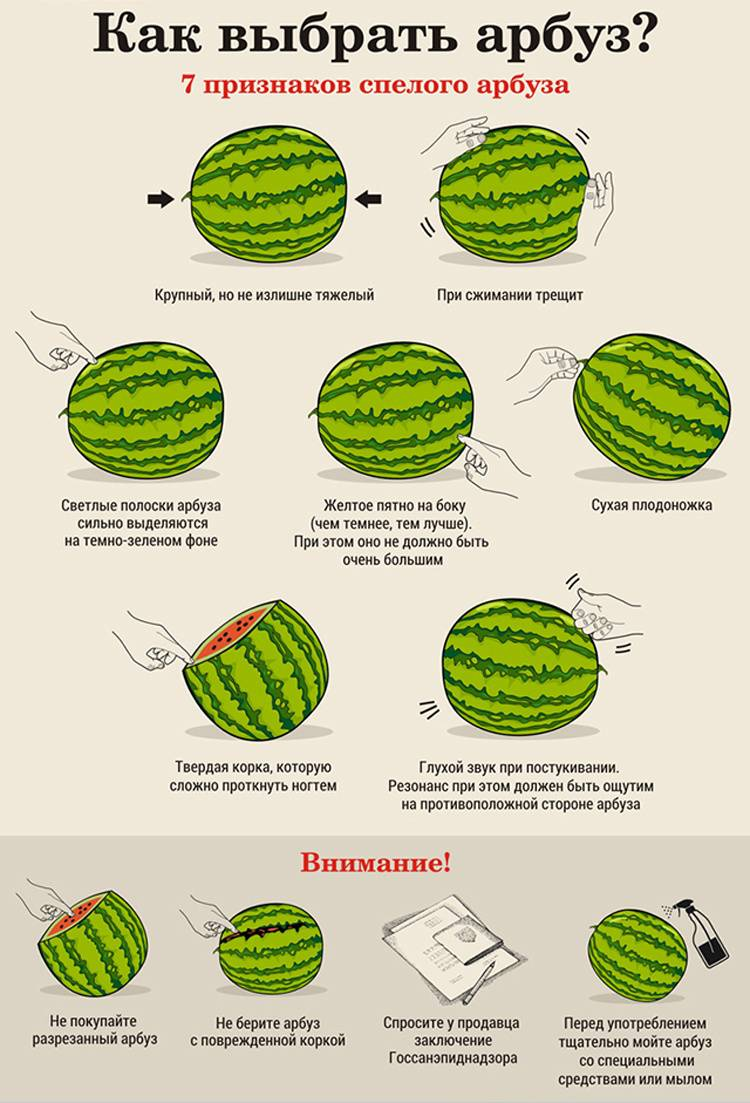 Как правильно выбрать спелый и сладкий арбуз