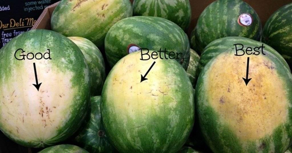 Как правильно выбрать спелый и сладкий арбуз: признаки определения зрелости