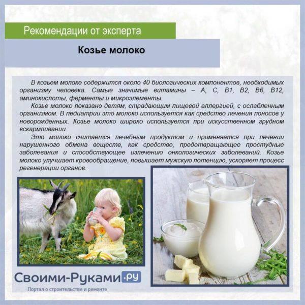 Козье молоко для грудничка: полезные свойства, сроки и особенности введения в рацион
