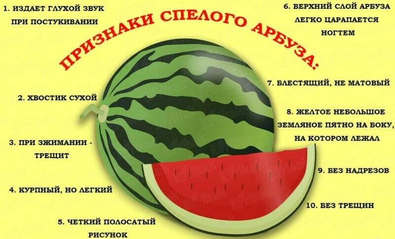 Как правильно выбрать арбуз — спелый, вкусный, сочный