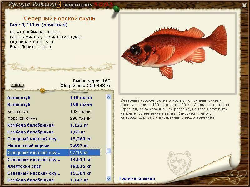 Морской окунь - вкусные рецепты приготовления