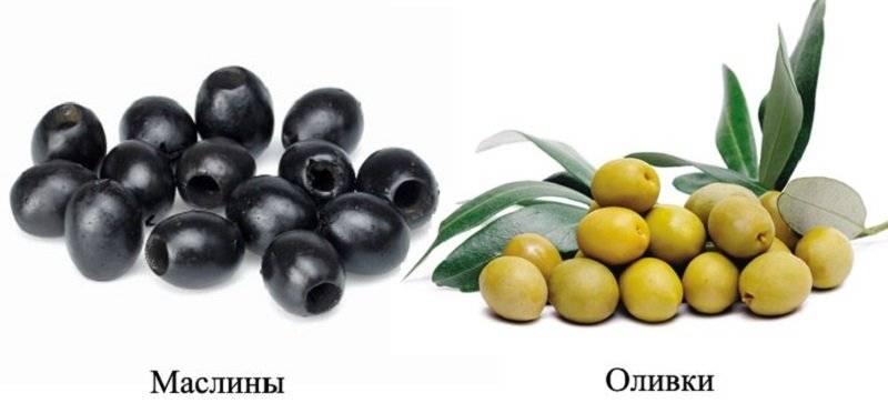 Оливки и маслины – что полезнее?