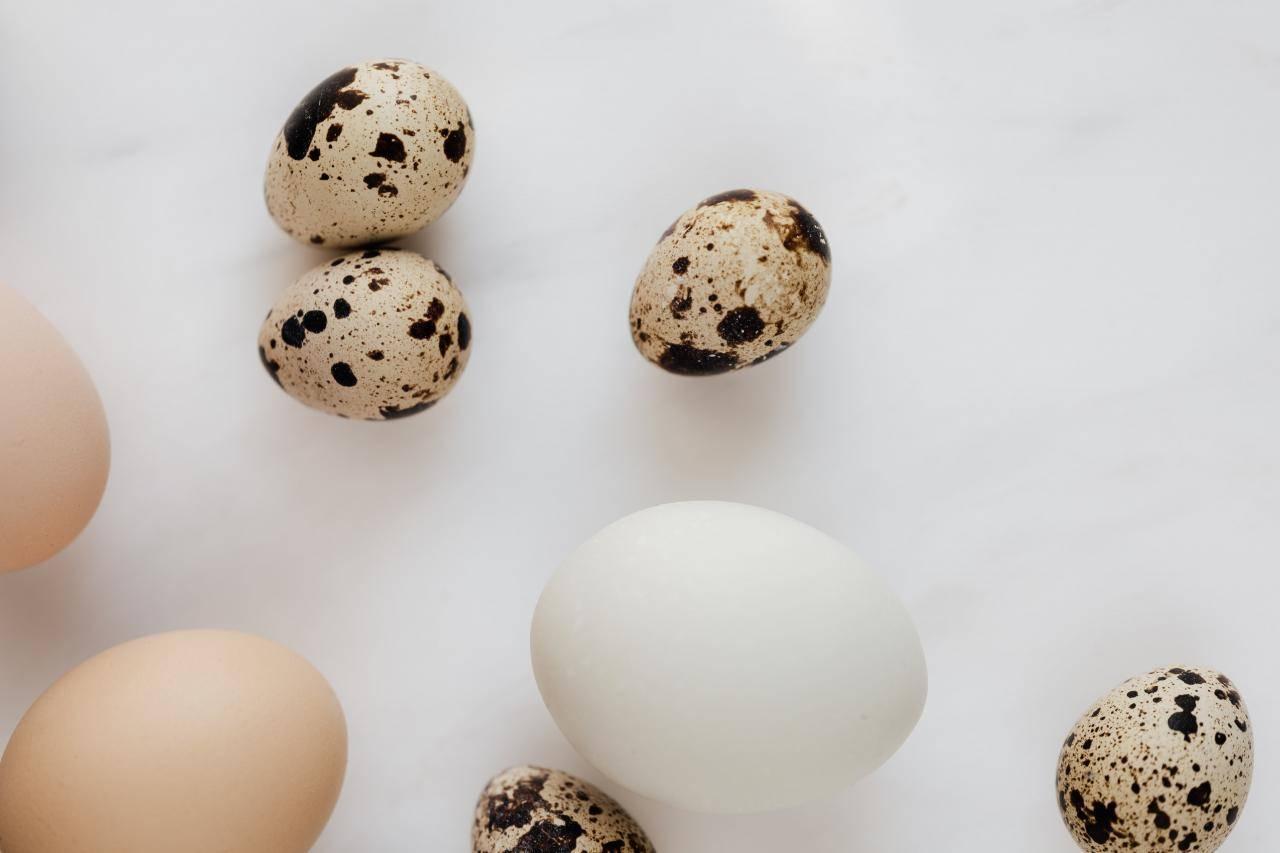 Куриные и перепелиные яйца при гв: правила безопасности