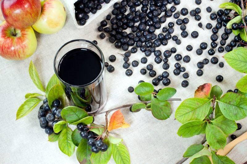 Польза черноплодной рябины и ее применение