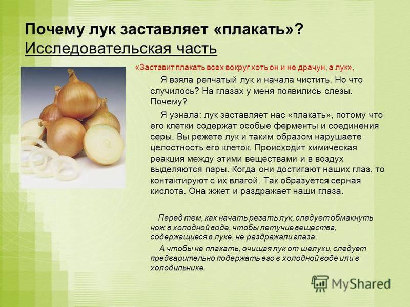 Репчатый лук : свойства и химический состав | компетентно о здоровье на ilive