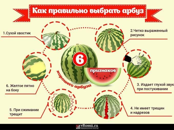 Как выбрать спелый арбуз в магазине или на рынке
