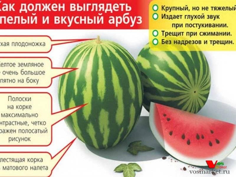 Как правильно выбрать спелый и сладкий арбуз при покупке и на грядке (бахче)?