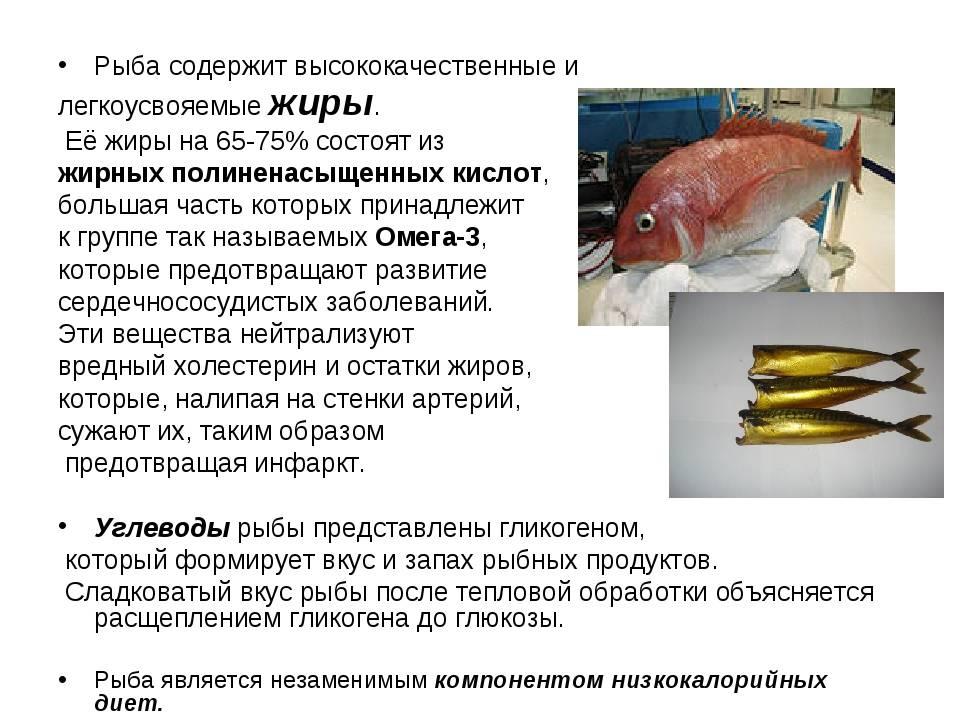 Лучшие блюда из морского окуня и все секреты их успешного приготовления