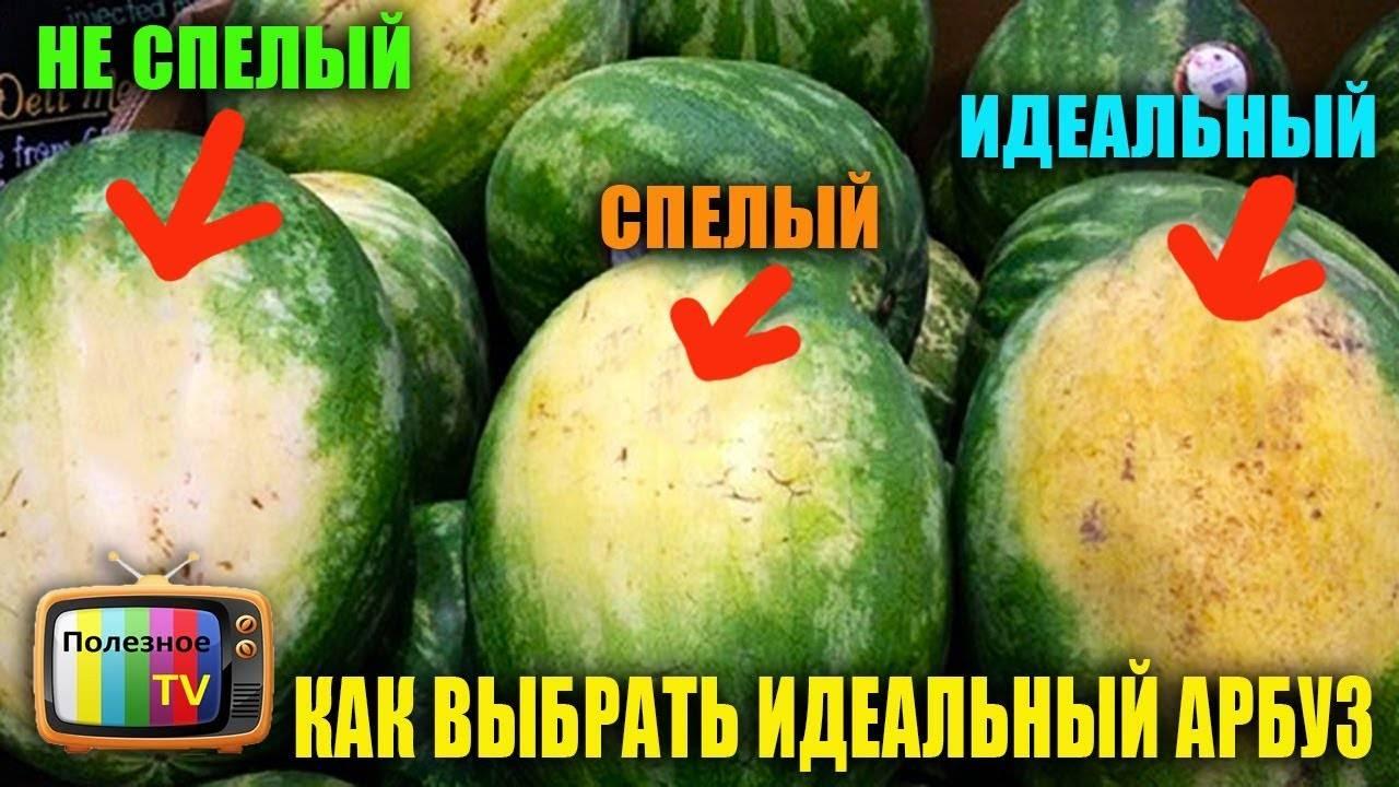 Как выбрать арбуз на рынке и в магазине