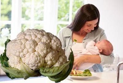 Брюссельская капуста при грудном вскармливании: можно ли её есть маме при гв, а также с какого возраста и как давать кушать детям до 1 года? русский фермер