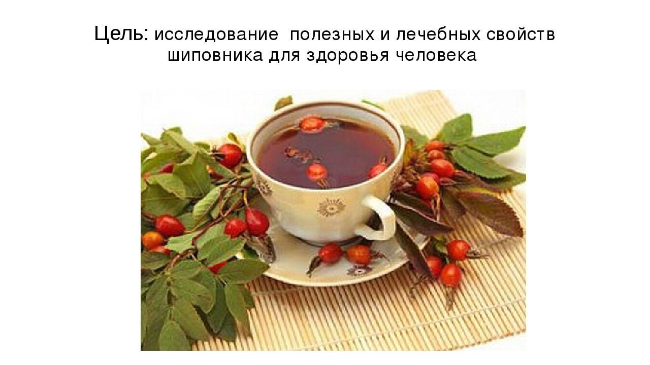 Полезный шиповниковый чай. как заварить его и не потерять витамин с?