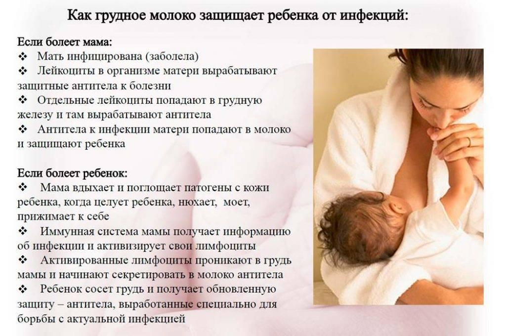 Хрен при беременности, можно ли есть во время грудного вскармливания, состав и полезные свойства продукта