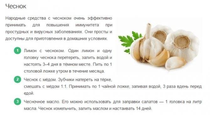 С какого возраста можно давать ребенку лук, когда вводить в прикорм, вред и польза репчатого лука для детей