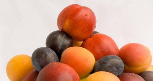 Разрешены ли персики при грудном вскармливании?