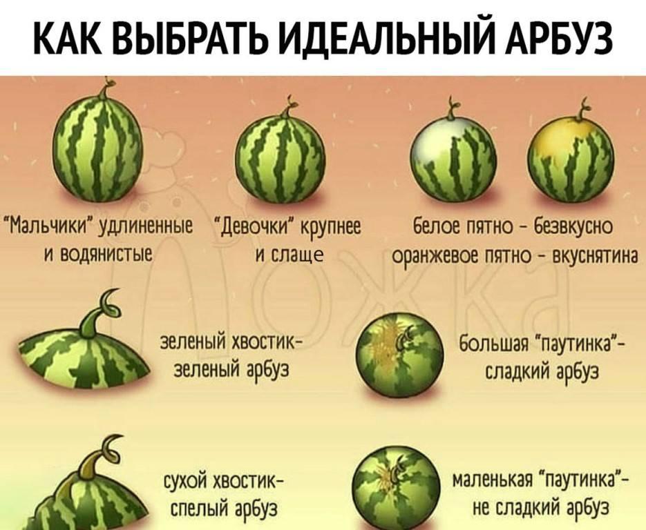 Как правильно выбрать арбуз спелый и сладкий фото видео
