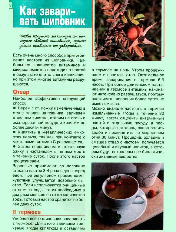 Чем полезен шиповник? плоды шиповника полезные свойства.