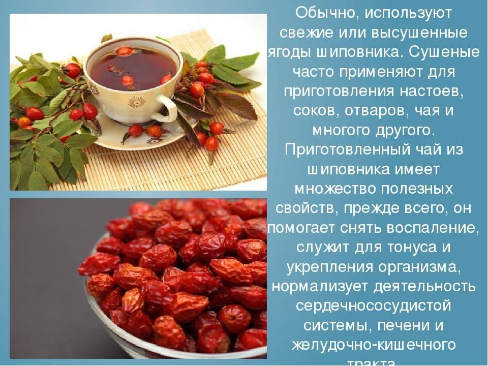 Польза и вред шиповника при беременности: сиропы, настои, чаи   компетентно о здоровье на ilive