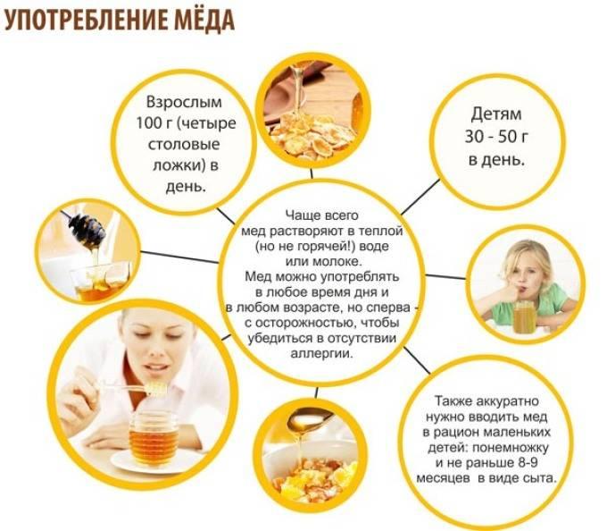 Можно ли грудничку давать мед, польза и противопоказания для новорожденного