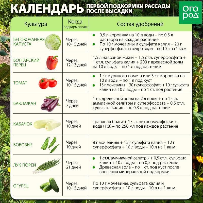 С какого возраста можно давать ребенку баклажан как вводить овощ в прикорм в 1 и 2 года