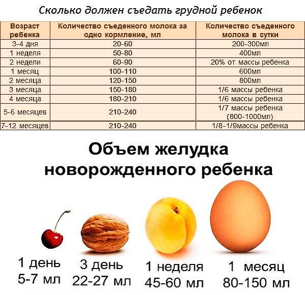 Сколько должен съедать новорождённый за одно кормление
