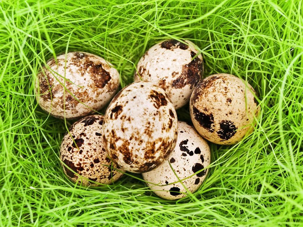 Яйца при грудном вскармливании: можно ли вареные или омлет в первый месяц гв