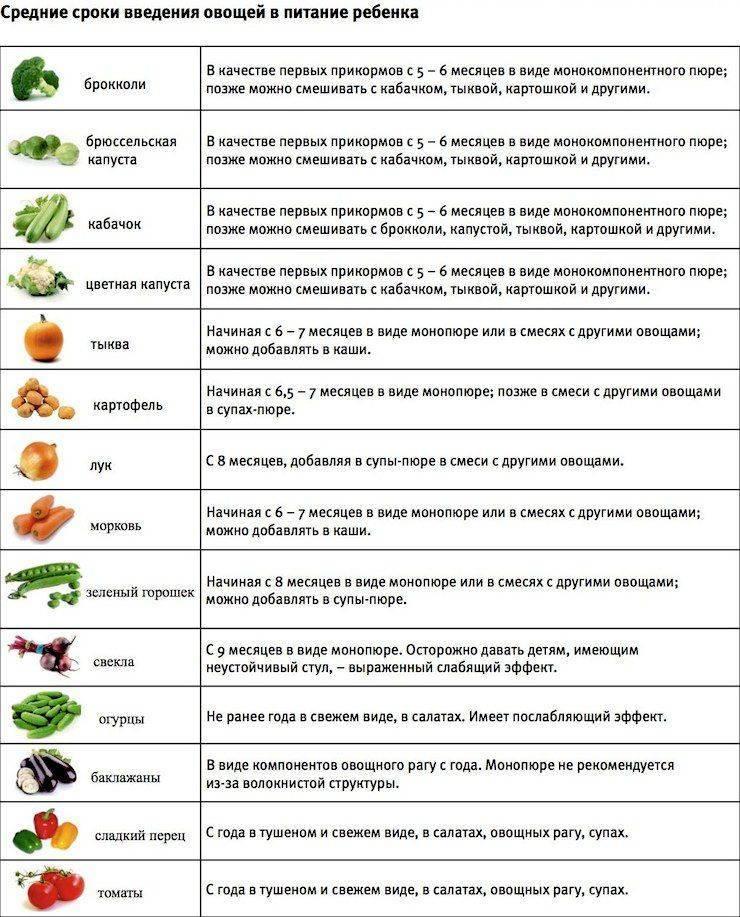Первый прикорм: кабачок и цуккини- энциклопедия детское питание