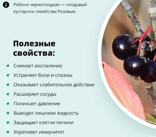Черноплодная рябина: полезные свойства | food and health