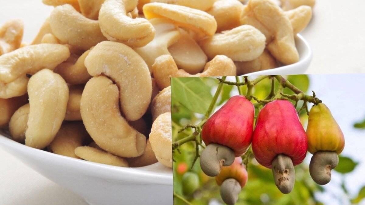 Кешью польза и вред орехов для организма женщины, мужчины, детей