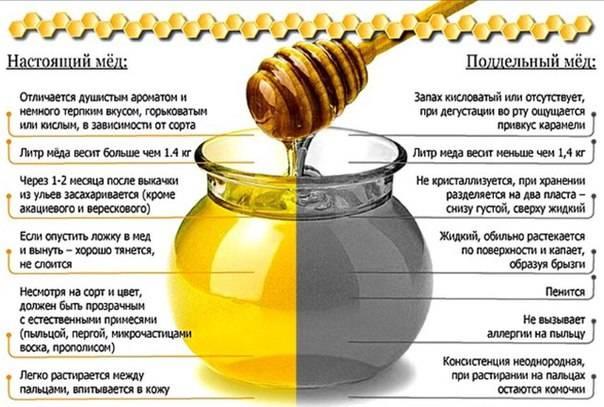 Можно ли давать мед грудничку: со скольки месяцев можно вводить в прикорм, польза и вред