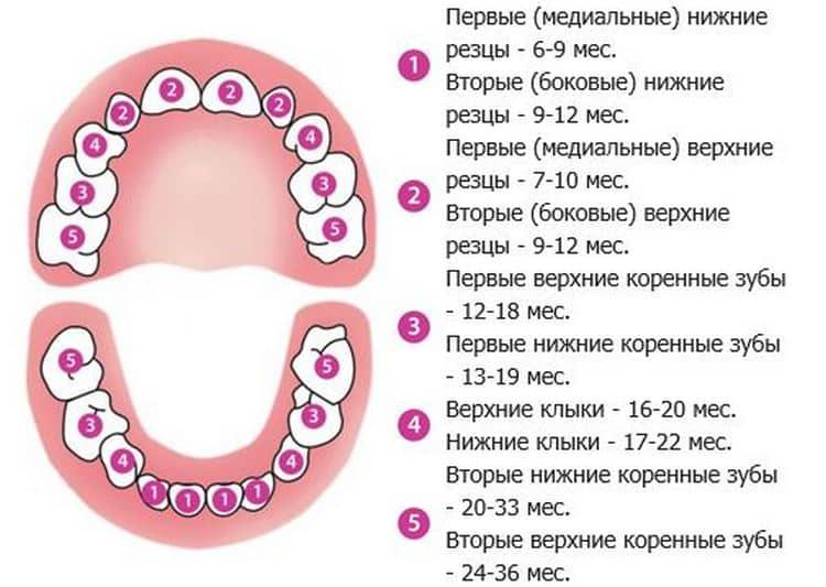 Рвота при прорезывании зубов у детей - medical insider