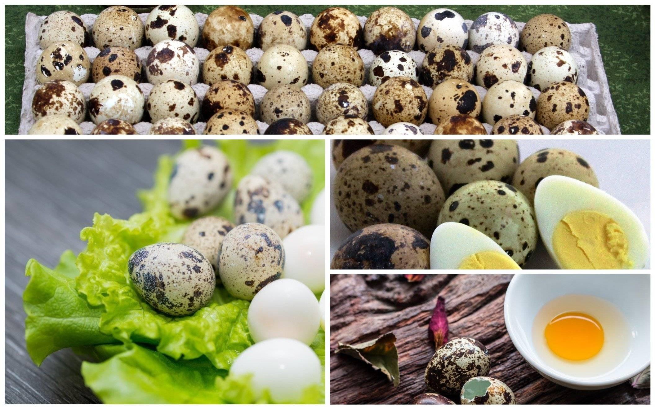 Можно ли перепелиные яйца при грудном вскармливании, когда и как вводить в меню?