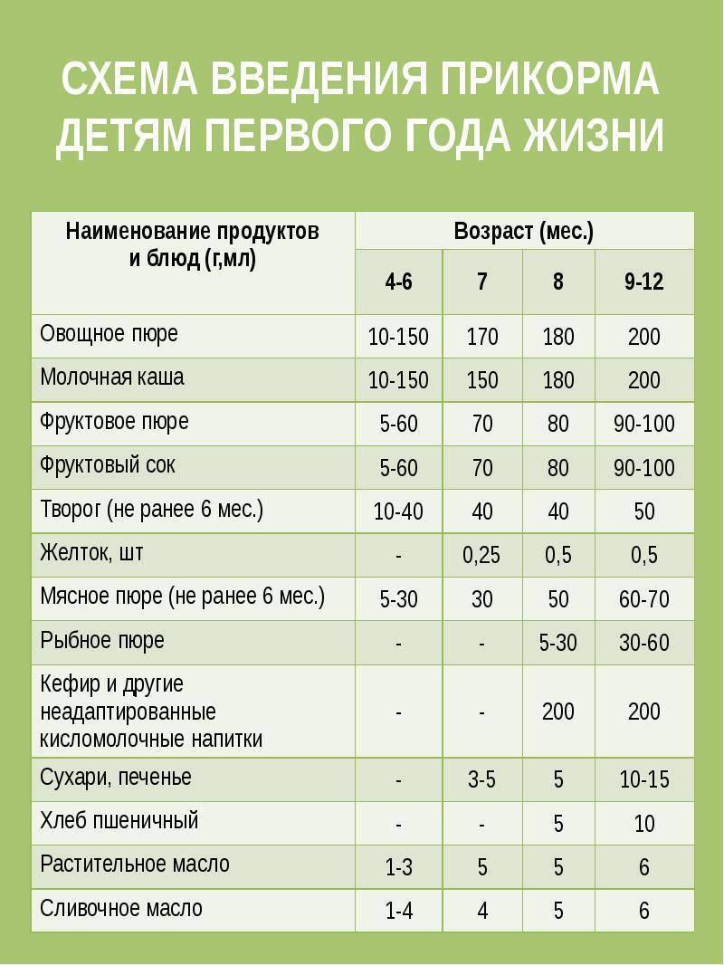 Выращивание кабачков цуккини и уход