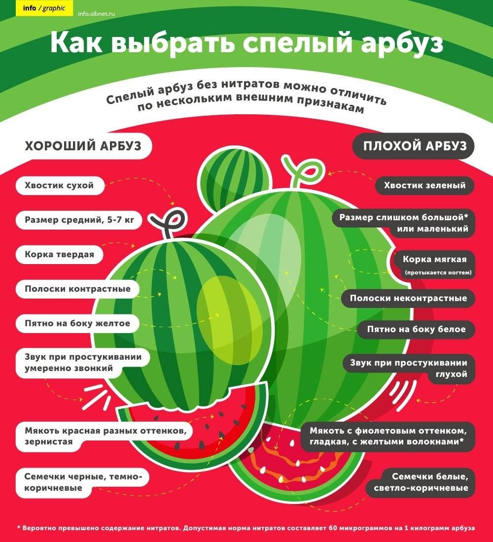 Как выбрать арбуз: какой арбуз самый сладкий и сочный? howchooser - выбирай правильно!