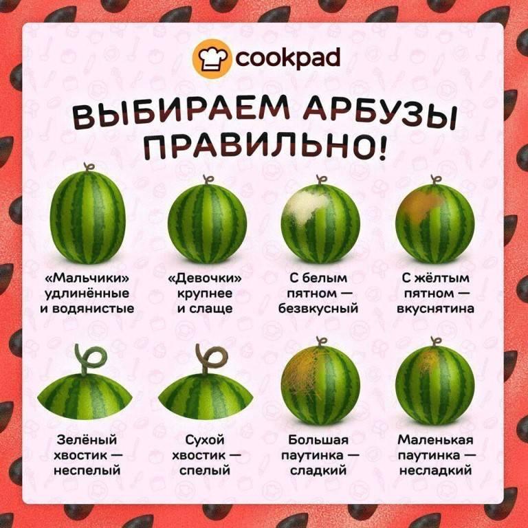 Узнаем, как выбрать спелый и сладкий арбуз: как выглядит хороший плод, как правильно определить спелость на грядке и при покупке и выбрать вкусный