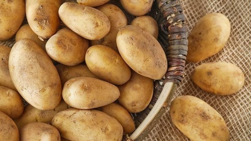 Количество картофеля при грудном вскармливании ребенка