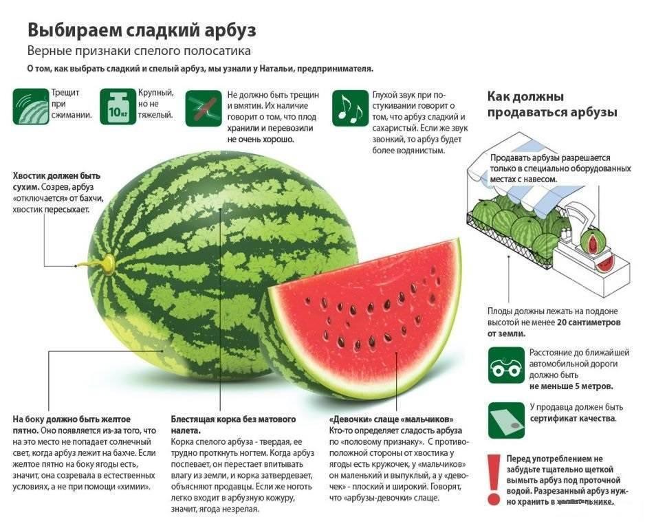 Как выбрать арбуз: чтобы он был спелый, сладкий и вкусный, проверенные методы