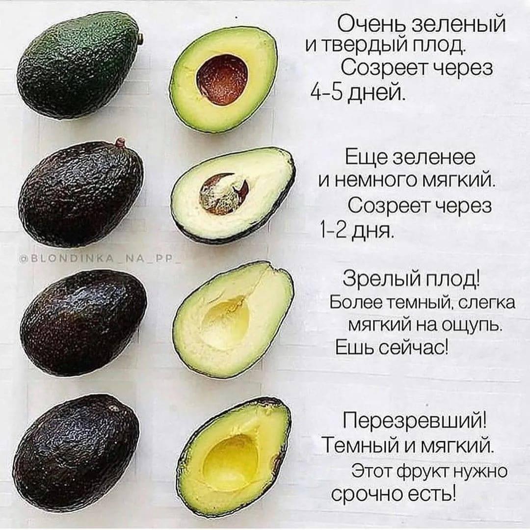 В каком возрасте можно давать ребенку авокадо?