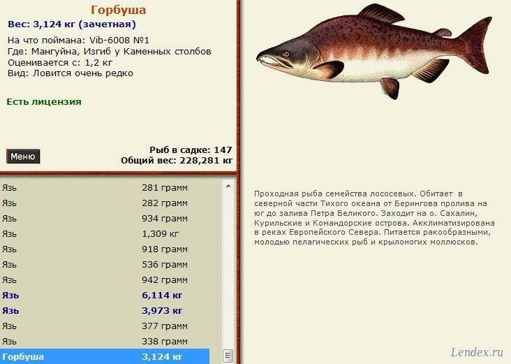 Горбуша: калорийность, польза и вред рыбы, полезные свойства для мужчин, беременных женщин и детей