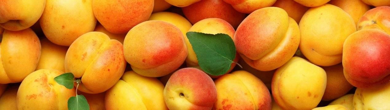Курага при грудном вскармливании и абрикосы: можно ли кормящей маме в 1 месяц?