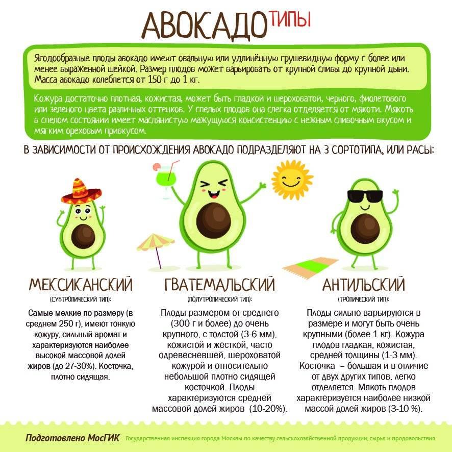Польза авокадо для здоровья. 3 полезных рецепта с авокадо